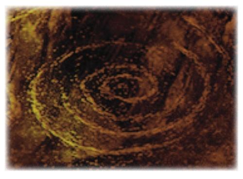 golden spiral raglan road