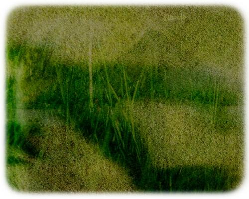 birded grass