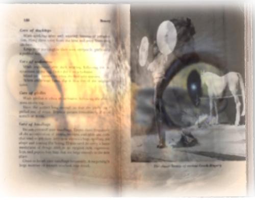full book x