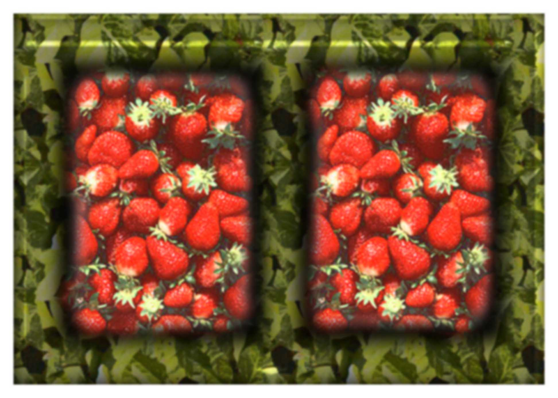 strawberries final