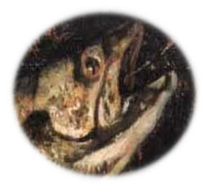 janus fish